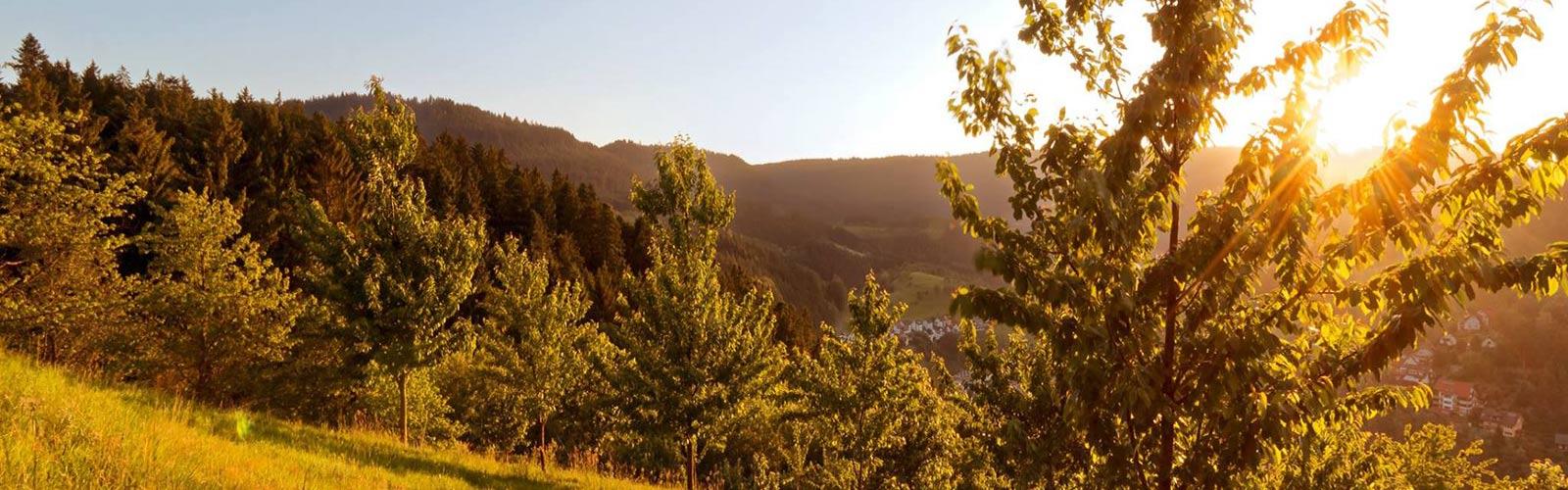 panoramaweg_adlerbad_petra